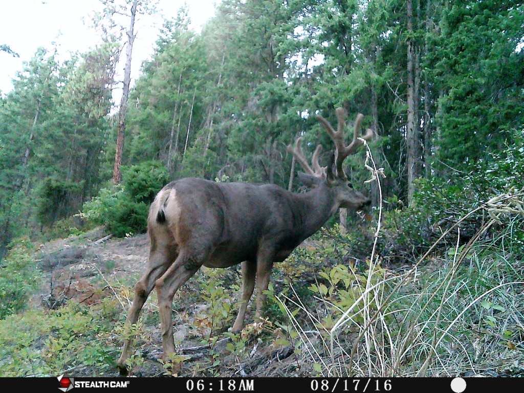 A 10-point buck wanders past our creature cam in the early morning hours