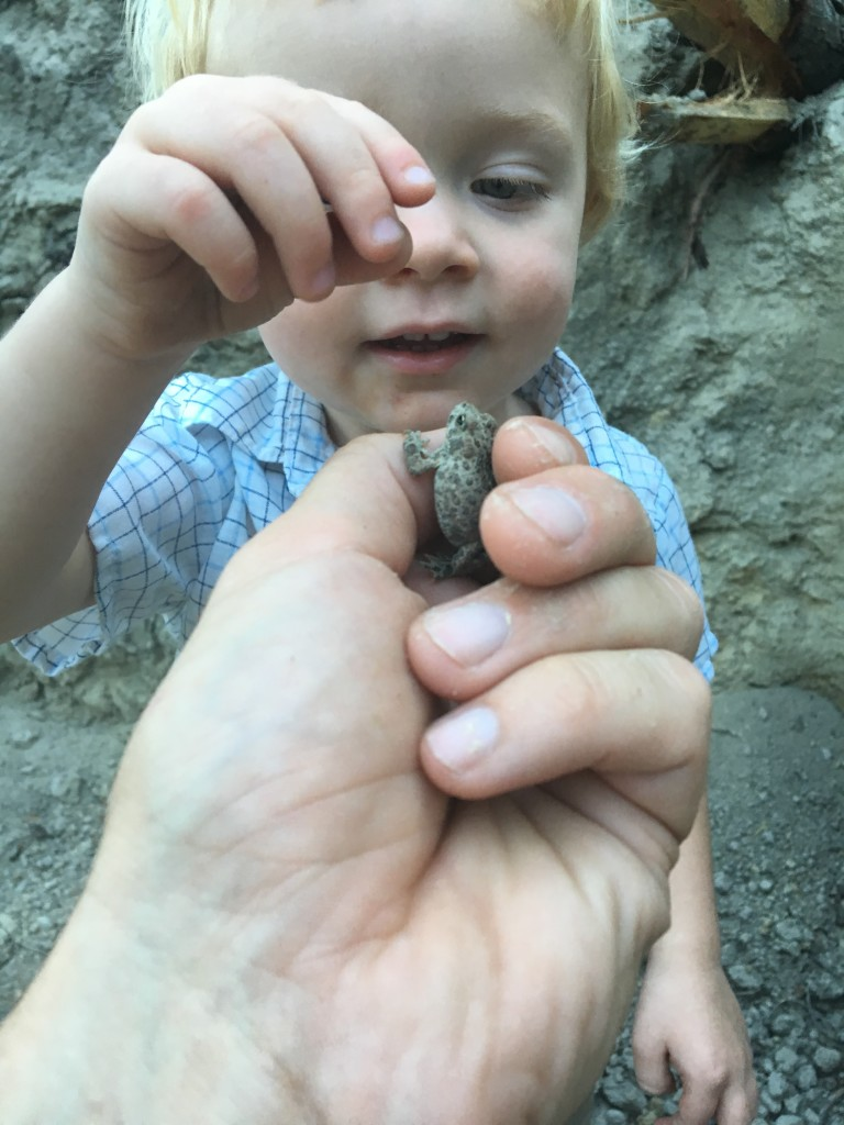 We found this baby toad roaming around the foundation of our future house